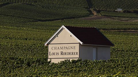 SUSTAINABLE VITICULTURE CERTIFICATION | Champagne Louis Roederer.