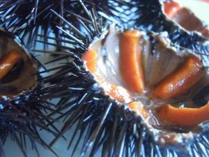 ricci di mare...  http://www.salentomonamour.com/prodottimare.php