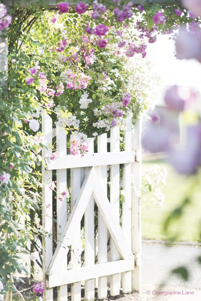 Gate, David Austin Rose Garden, England, by Georgianna Lane