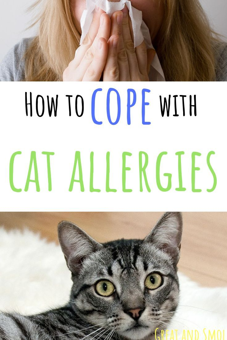 How to Cope with Cat Allergies Cat allergies, Pet