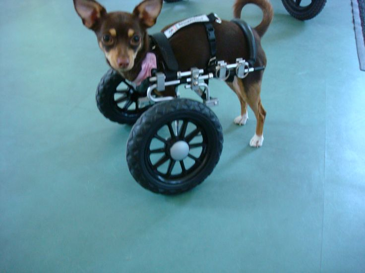 9 Best Front Wheel Carts Images On Pinterest Wheelchairs