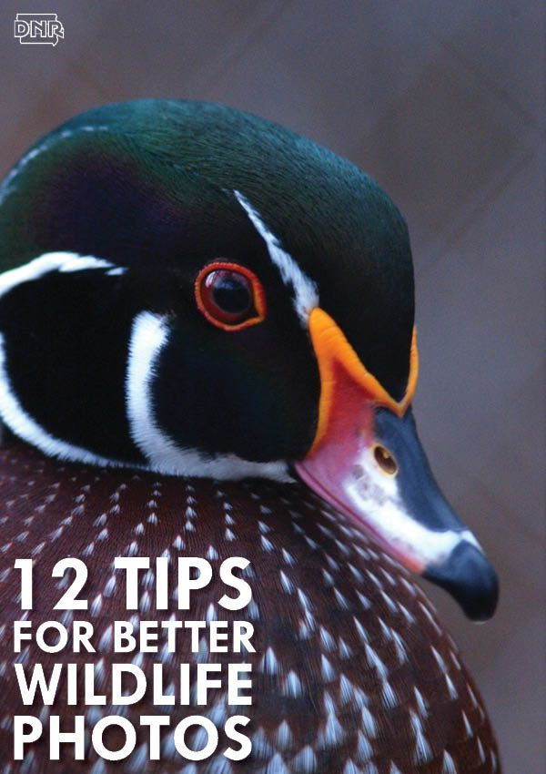 Get better photos of nature and wildlife with these 12 tips for better outdoor photography | Iowa DNR