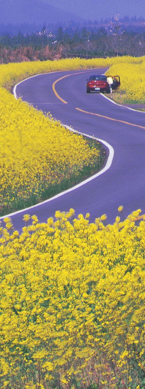 韓国 チェジュ島(Jeju Island, South Korea)