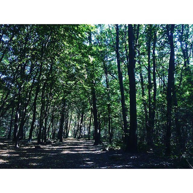 """【doudouhana】さんのInstagramをピンしています。 《パリ郊外 franconville の小さな森。  我が家では、""""リスに逢える森""""と 名付けています。  ブラックベリーも沢山採れたし、快晴、楽しかった。  帰りは、お決まりのコースで、近くのIKEAでおやつタイム。  #森#フランス#秋の気配 #緑 #パリ#france #paris#forest #lesbois》"""