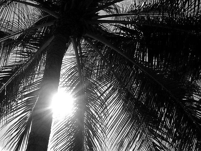 Diary - Hawaii