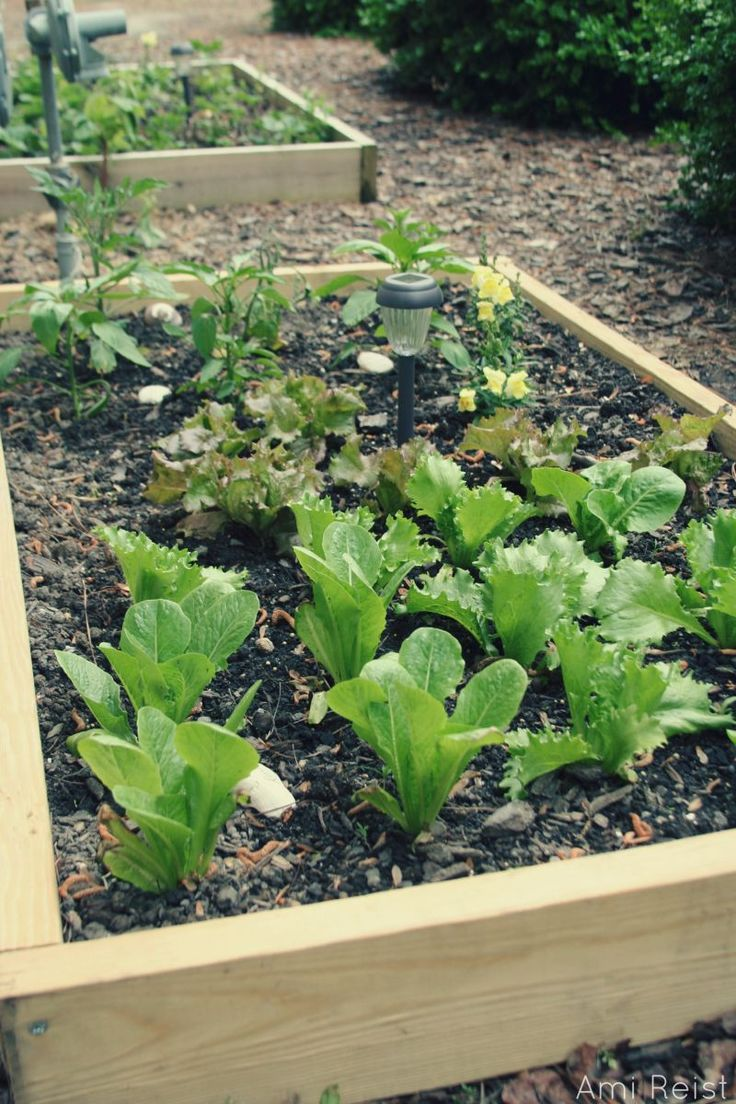 ShoreBread | Create an Above Ground Garden for Under $25: Grow Your Own Vegetables and Herbs