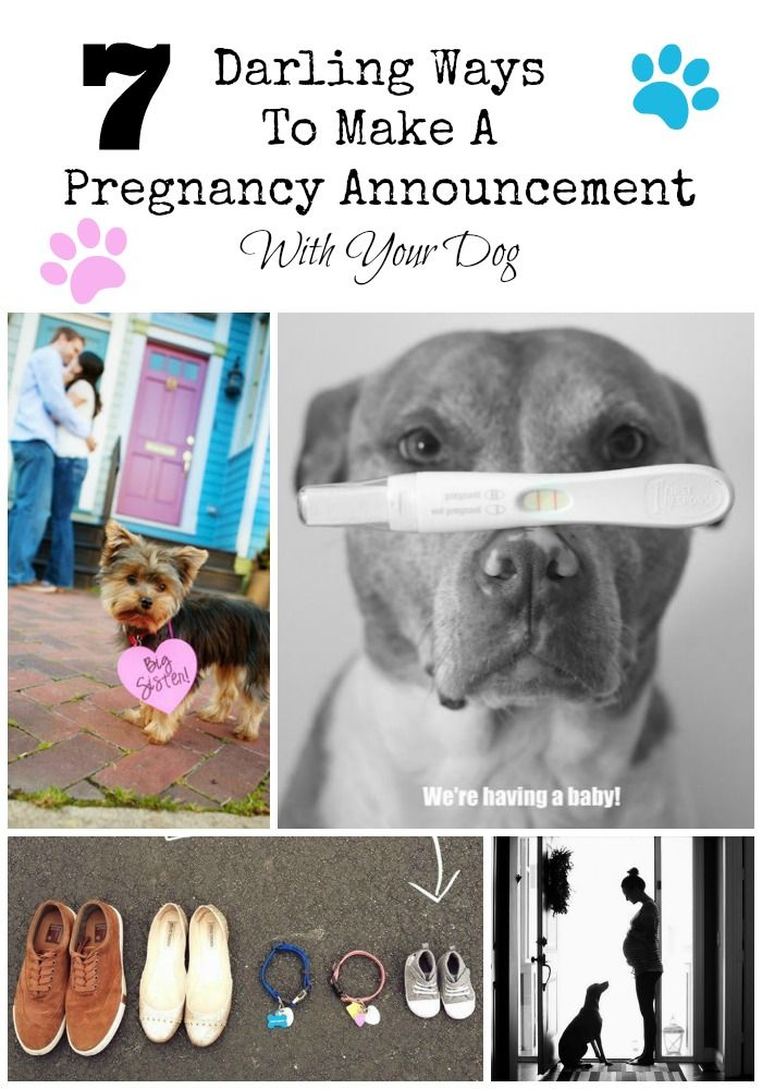 7 Ways To Make A Pregnancy Annoucement With Your Dog – How to Make a Baby Announcement