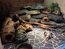 Einrichtung - der-leopardgecko
