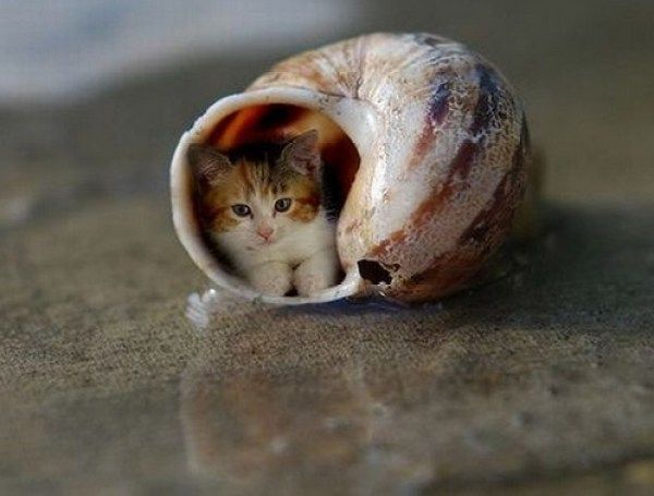 Top 10 Smallest Cats In The World Small Cat Cats Tiny Cats