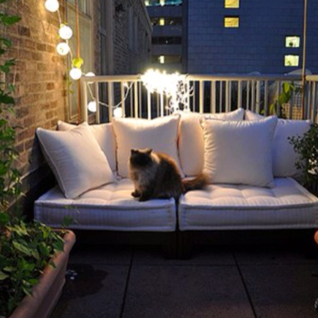Night time on a balcony with a cat and fairy lights = peace