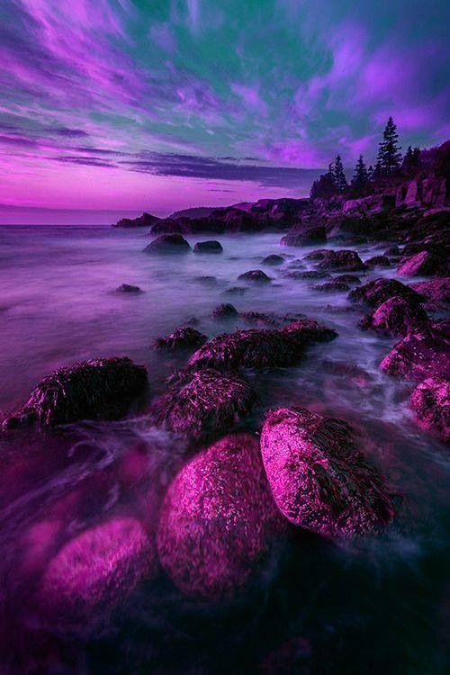 Pretty purple landscape