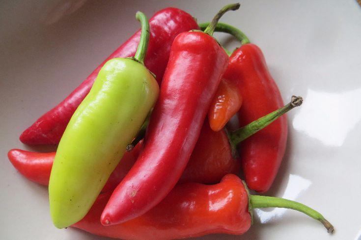 Hungarian Hot Wax - c. annuum Schärfe 5-6 (10 Chili Samen) #heimgruen