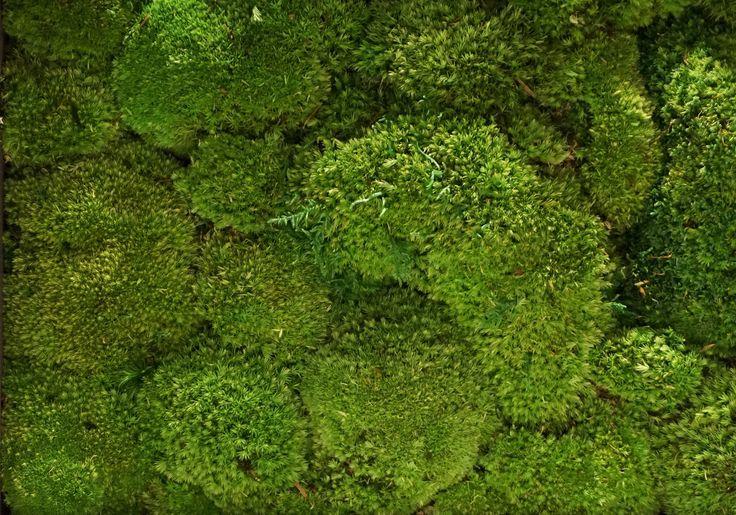 Gamme Bolmoss Moss Green.  Een Gamme moswand of mospaneel van Nature at home is een prima alternatief voor levende planten en betekent een prachtige, groene, onderhoudsloze verrijking voor ieder interieur. Bovendien heeft mos een sterke geluiddempende werking.