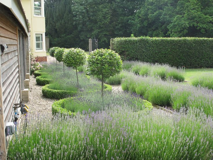 Bay standards surrounded by box - Lavendar Garden