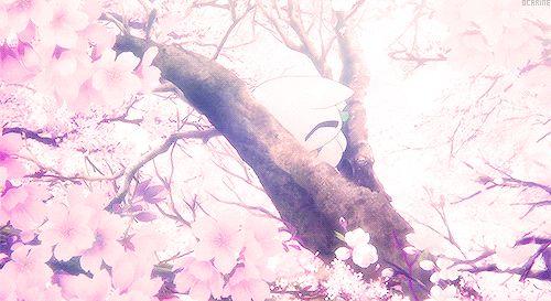 Cherry bloom | via Tumblr