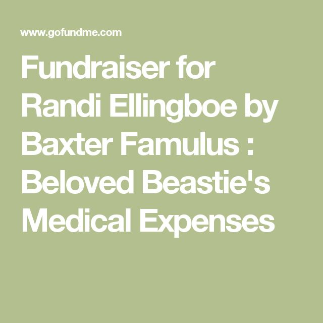 Fundraiser for Randi Ellingboe by Baxter Famulus : Beloved Beastie's Medical Expenses