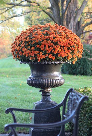 Classical style urn with Autumn mumsOrange, Fall Decor, Fall Mums, Autumn Gardens, Fall Autumn, Flower Beds, Fall Flower, Front Porches, Urns