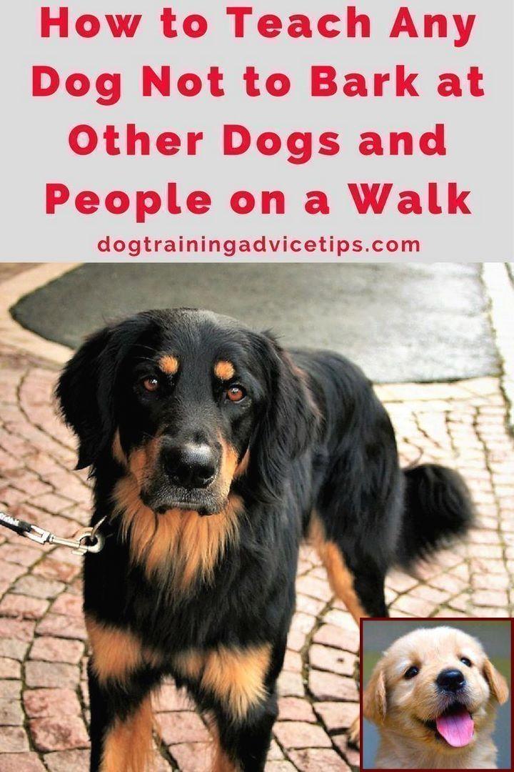 1 Have Dog Behavior Problems Learn About Dog Behavior Towards