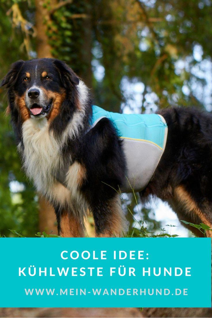 Hier erfahrt ihr, ob eine Kühlweste für Hunde eine gute Idee ist ...