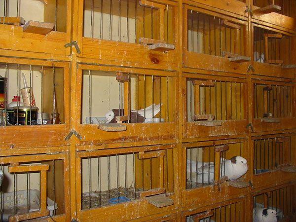 другой кухне гнездовые ящики для голубей фото розеток нет, можно