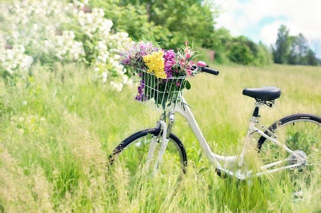 Spring meadow. Free image by our member 'jill111': https://pixabay.com/en/bicycle-meadow-flowers-grass-bike-788733/