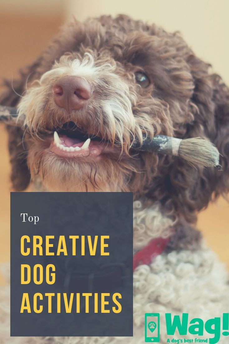 Top Activities For Creative Dogs - Wag! | Dog Activities | Dogs, Dog