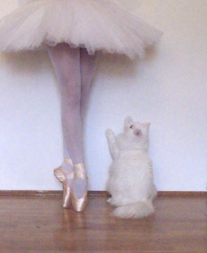 pick me up...: Ballet Boards, Kitty Cat, Dance Pictures, Kitty Ballerinas, Kitty Ballet, Ballerinas Cat, Tiny Dancers, Silly Things, White Cat