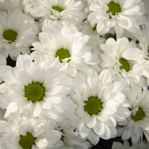 Santini blanc