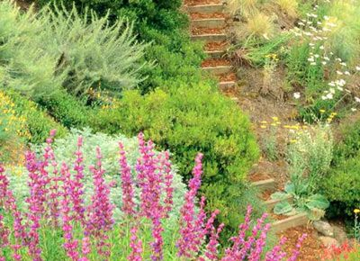The California Native Landscape - DIY landscaping with native california plants
