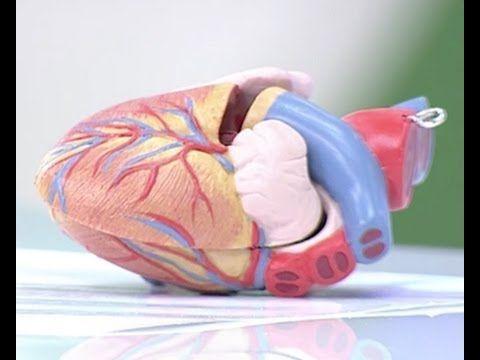 El corazón, ¿cómo funciona? - YouTube