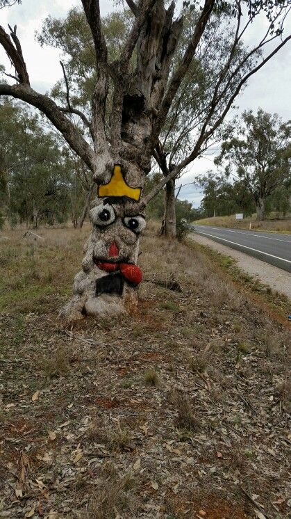 Tree art on the road between Tamworth Manilla NSW