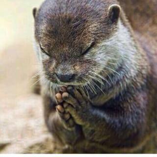 可愛い面白い動物画像 - Google 検索