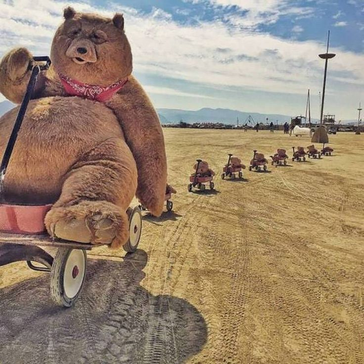 Funny Burning Man Memes Of 2017 On Sizzle: Funniest Instagram Profile Pictures
