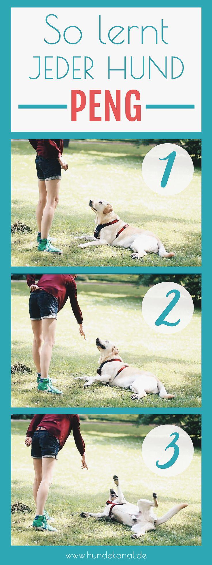 Videoanleitung – Hundetrick PENG Hund Tricks beibringen