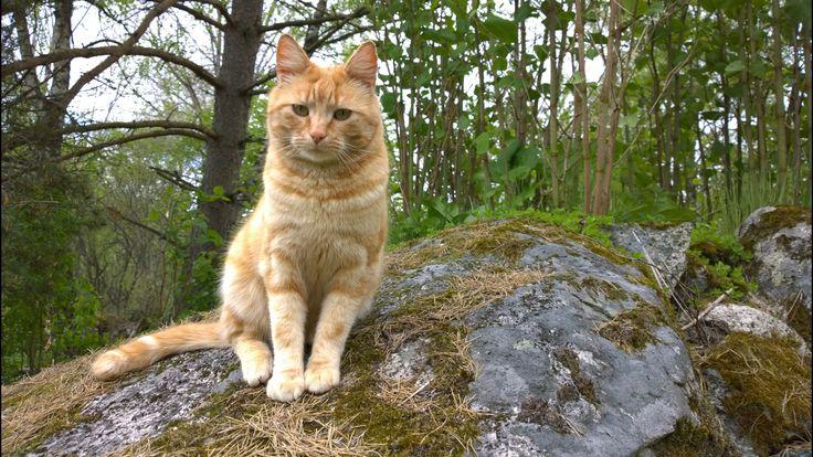 Cat on adventure