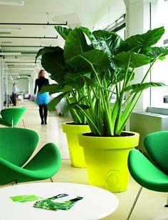 Love these plants!! The strelitzia!!