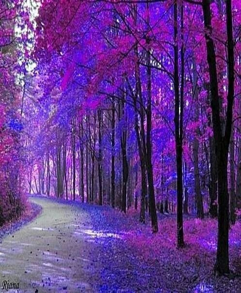 Mesmerizing Colorful Nature