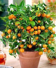 Växter för terrass och veranda | Bakker.com