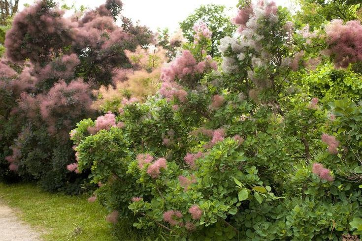 Farbenfroher Sichtschutz: Blütenhecken anlegen und pflegen,  #anlegen #Blütenhecken #Farbenfr… – Stauden