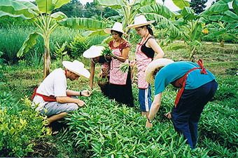 Chiang Mai Thai Farm Cooking School- Get picked up from your hotel and spend all day cooking for $30 USD!