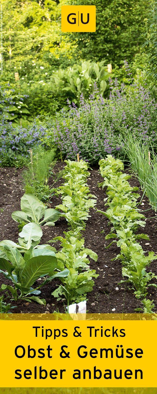 Mit diesen Tipps & Tricks könnt ihr ganz einfach Obst & Gemüse selber anbauen. ⎜GU