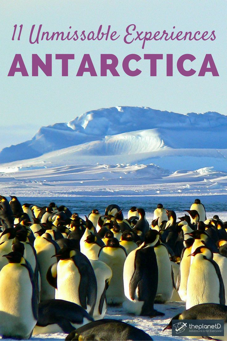 Antarctica is one of the last adventure travel frontiers in the world, and traveling there via an Antarctica cruise is truly the trip of a lifetime. Here are eleven experiences you won't want to miss during your trip from kayaking amongst seals and glaciers to whale watching and visiting penguin colonies. | Blog by the Planet D #Travel #Antarctica