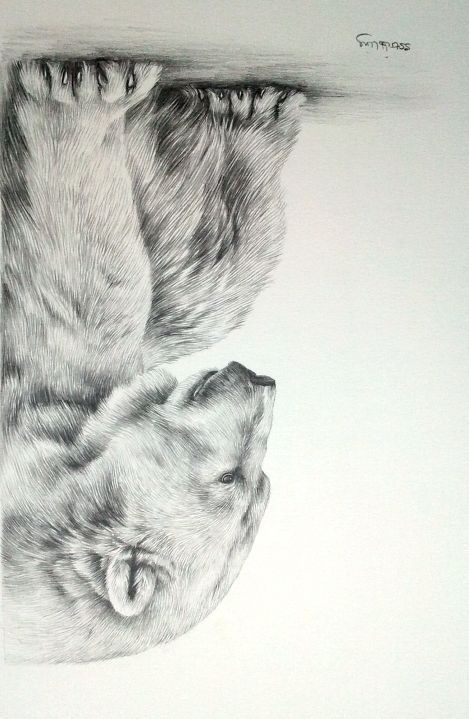 Pencil Drawings of Bears | Pencil+Drawings+Of+Bears | POLAR BEAR Sarah Stribbling Original Pencil ...