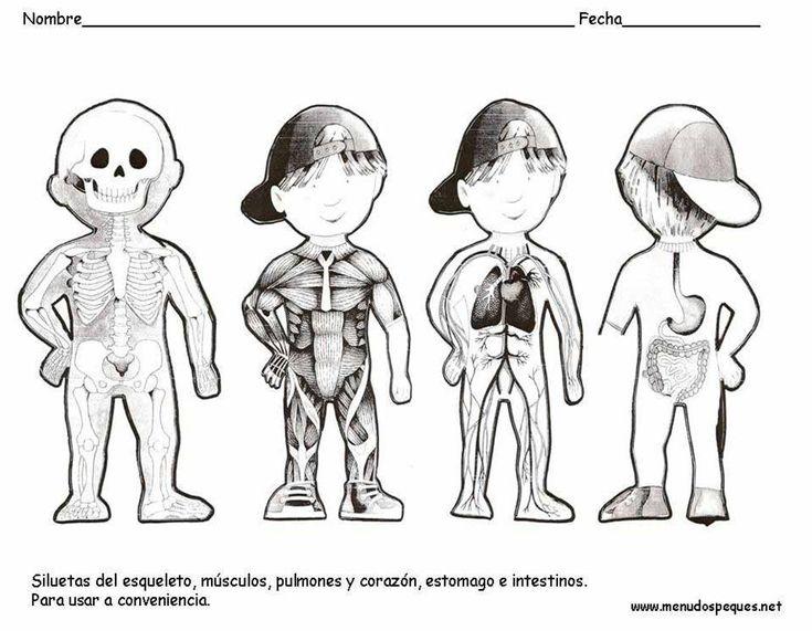Best 25+ Esqueleto humano partes ideas on Pinterest