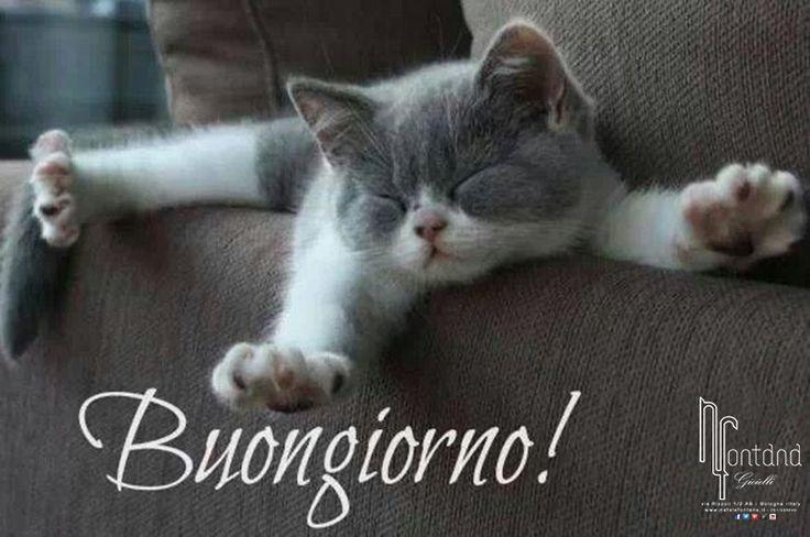 buongiorno con gattino frasi pinterest