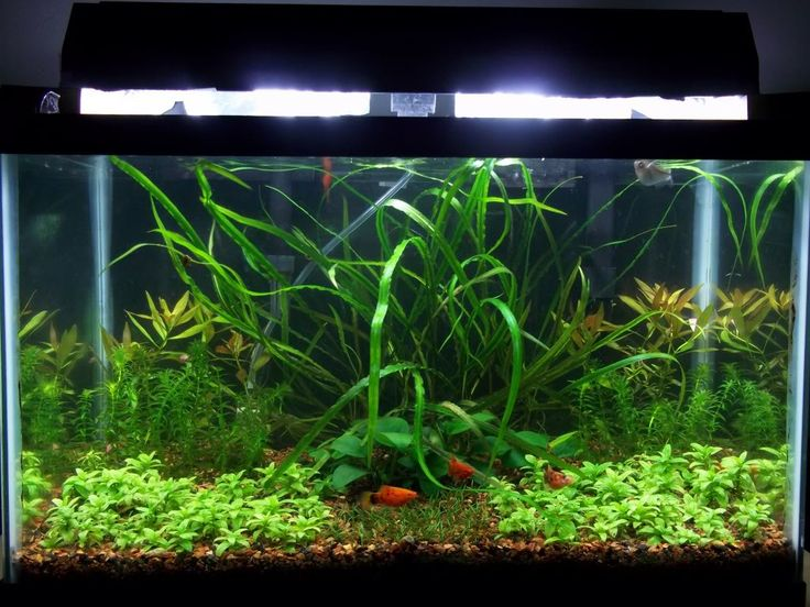 10 gallon fish tank terrarium 10 gallon terrarium for 10 gallon fish tanks