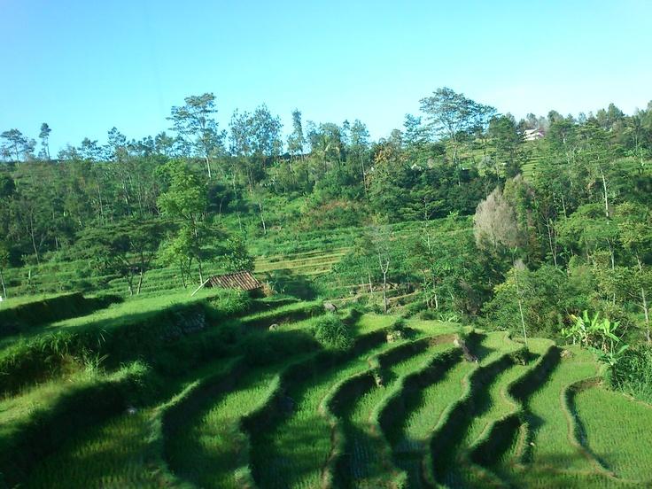 A view from @Tawangmangu, Solo City