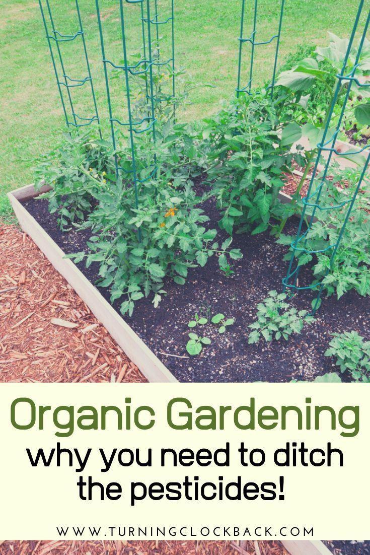 10 Reasons Why You Should Grow Your Own Organic Food Growing Organic Food Grow Organic Organic Recipes Backyard garden grow your own