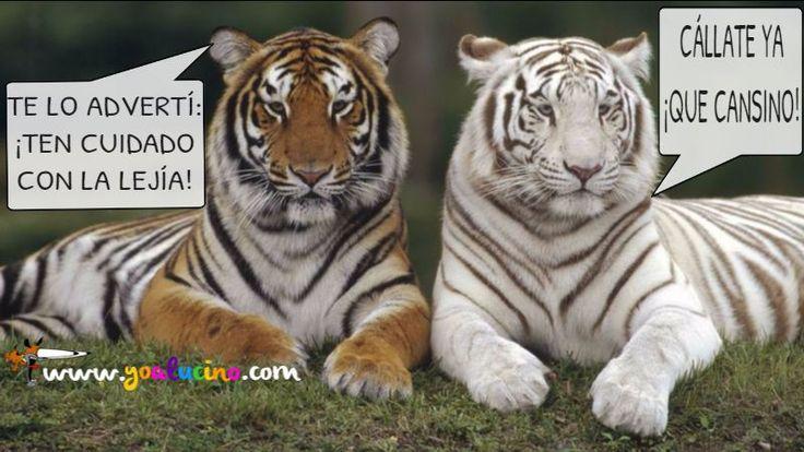 Tigre Desteñido