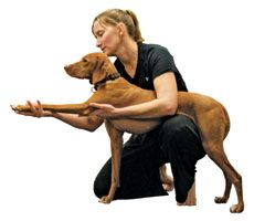 Doga: Yoga for You and Your Dog | The Bark   I would LOVE if I could get otto to do this with me!